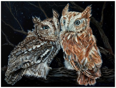 young-love-on-a-starry-night-screech-owls-prints